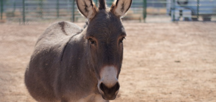 Real Hybrid Animals Mule