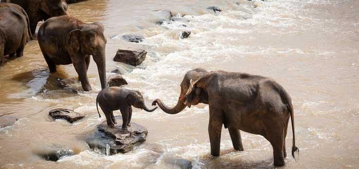 30 Curiosities about elephants 3