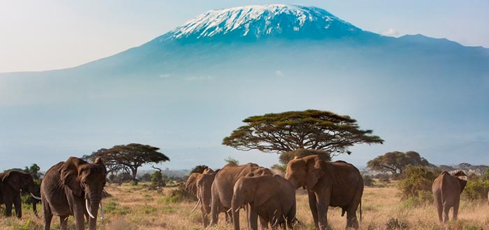 curiosities of Kenya, Amboseli National Park