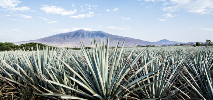 What is the Origin of Tequila?