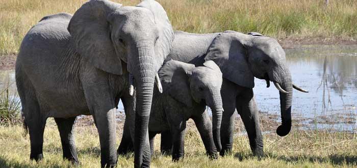 30 Curiosities about elephants